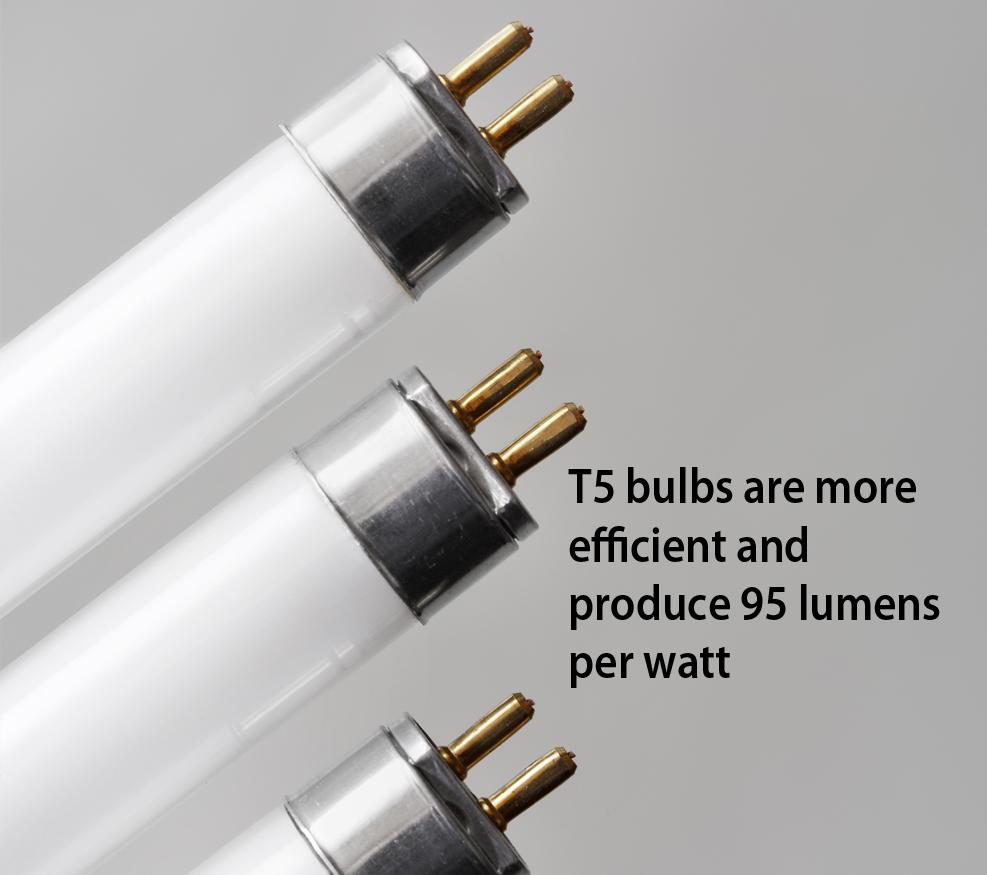 T5 bulbs